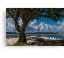 Sand and Seagulls Canvas Print
