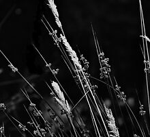 wild grass by Karen E Camilleri