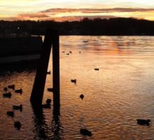 Sunset Upon the Ducks Sticker