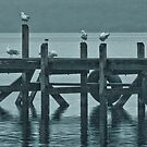 Gulls on the Jetty by pennyswork