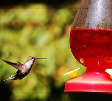 Ruby-throated Hummingbird by Seventy8