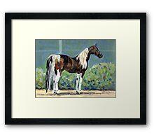 American Saddlebred Horse Portrait Framed Print
