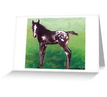 Appaloosa Foal Portrait Greeting Card