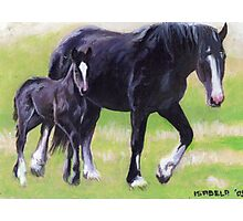 Clydesdale Mare and Foal Horse Portrait Photographic Print