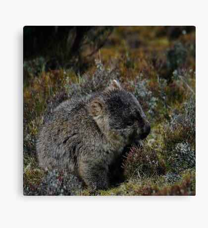 Wombat - Cradle Mountain Tasmania Canvas Print