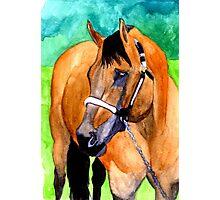 Buckskin Quarter Horse Halter Horse Portrait Photographic Print