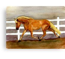 Haflinger Horse Portrait Canvas Print