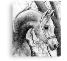 Arabian Halter Horse Portrait Canvas Print