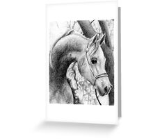 Arabian Halter Horse Portrait Greeting Card