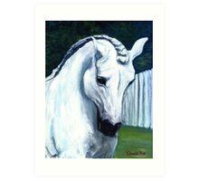 Andalusian Horse Portrait Art Print