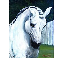 Andalusian Horse Portrait Photographic Print