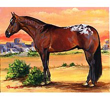 Appaloosa Horse Portrait Photographic Print