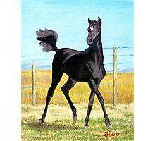 Free Spirit Arabian Horse Foal Portrait Photographic Print