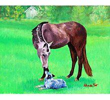 Best Friends Quarter Horse Portrait Photographic Print