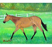 Buckskin Lungeliner Quarter Horse Portrait Photographic Print