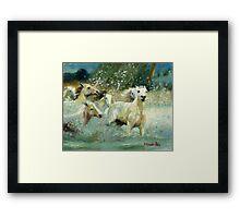 Camargue Horse Portrait Framed Print