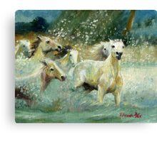 Camargue Horse Portrait Canvas Print