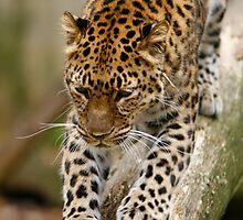 Big Kitty Big Stretch by GPMPhotography