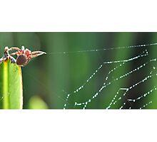 Spider in my Garden Photographic Print