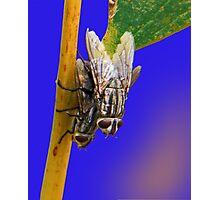 2 flys Photographic Print