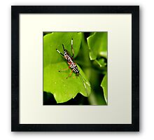 Insect on Leaf Framed Print
