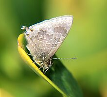 Butterfly on Leaf by fishcando