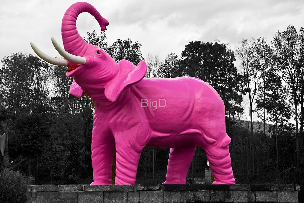 Pink Elephant by BigD