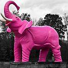 Pink Elephant by BigD