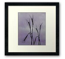 Tough Wheat Framed Print