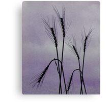Tough Wheat Canvas Print