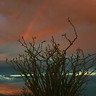 Ocotillo Rainbow by Barbara  Brown