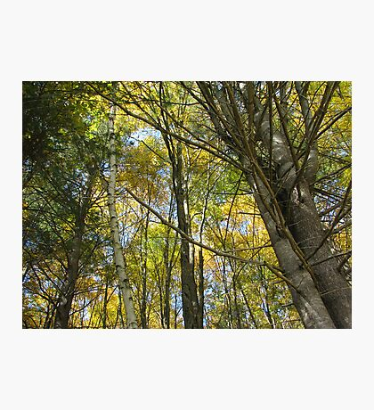 Columbus Day weekend Foliage Photographic Print