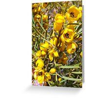 desert cassia Greeting Card