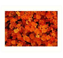 Hibbertia stellaris Art Print