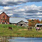 Fall At The Horse Farm by Deborah  Benoit