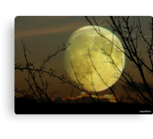 By Moonlight..... Canvas Print