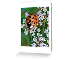 Ladybird Beetle on Queen Anne's Lace Greeting Card