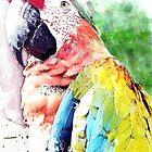 Catalina Macaw by William Martin