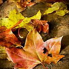 Fallen leaves by Olav Lunde