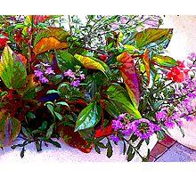 """Summers Flower Pot"" Photographic Print"