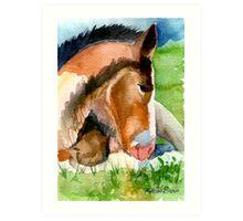 Clydesdale Foal Horse Portrait Art Print