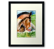 Clydesdale Foal Horse Portrait Framed Print