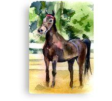 Morgan Horse Portrait Canvas Print