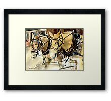 Mules In Harness Horse Portrait Framed Print
