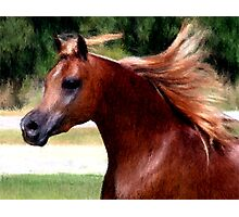 Arabian Horse Portrait Photographic Print