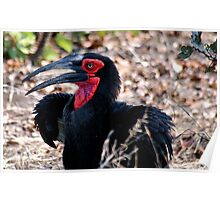 THE SOUTHERN GROUND HORNBILL Poster