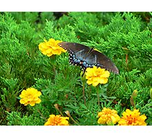 """'Blue Butterfly"""" Photographic Print"""
