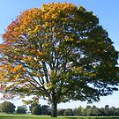 Two Tone Tree by groovygreen