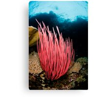 Pink Whip Canvas Print