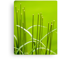 Symmetry in the Grass Canvas Print